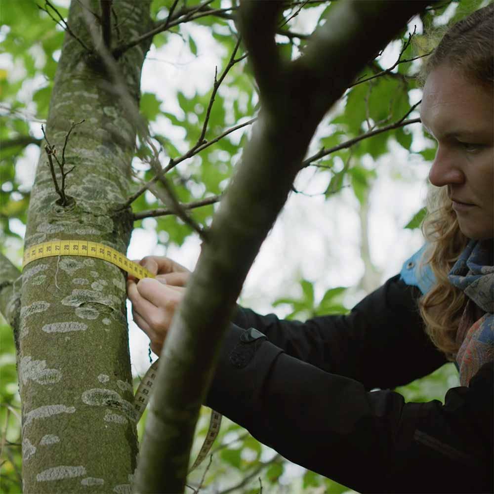 het meten van CO2 opslag in bomen